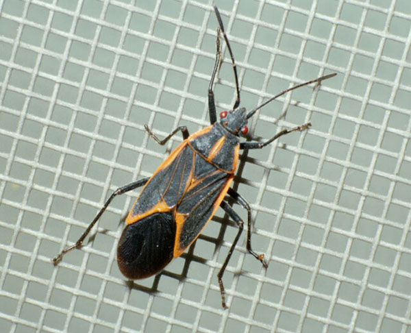 overwintering insects
